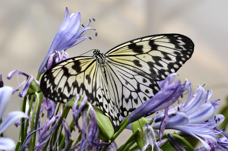 Butterfly, Moths And Butterflies, Insect, Brush Footed Butterfly Free Public Domain Cc0 Image