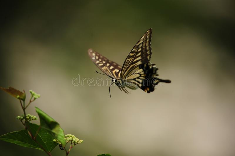 Butterfly, Moths And Butterflies, Insect, Invertebrate Free Public Domain Cc0 Image