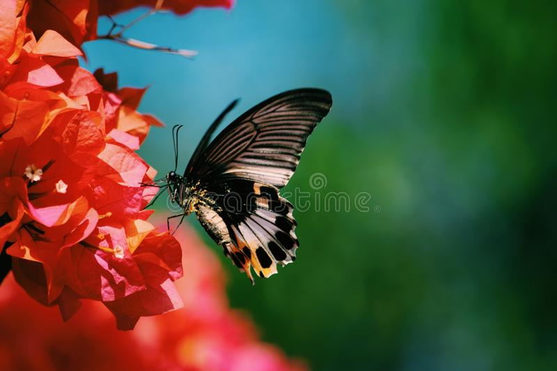 Butterfly, Moths And Butterflies, Insect, Nectar Free Public Domain Cc0 Image