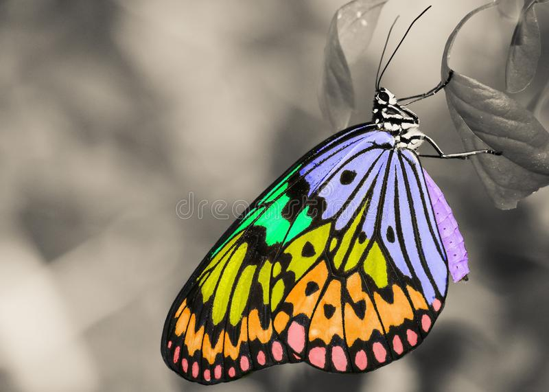Butterfly, Moths And Butterflies, Monarch Butterfly, Insect stock images