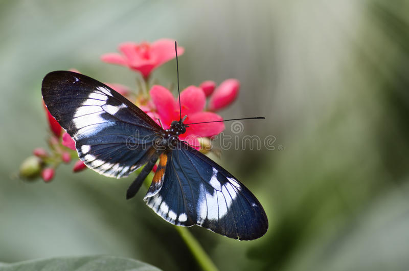 Butterfly in nature background stock photos