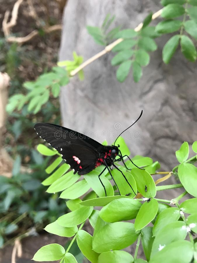 Butterfly in Nature royalty free stock photos