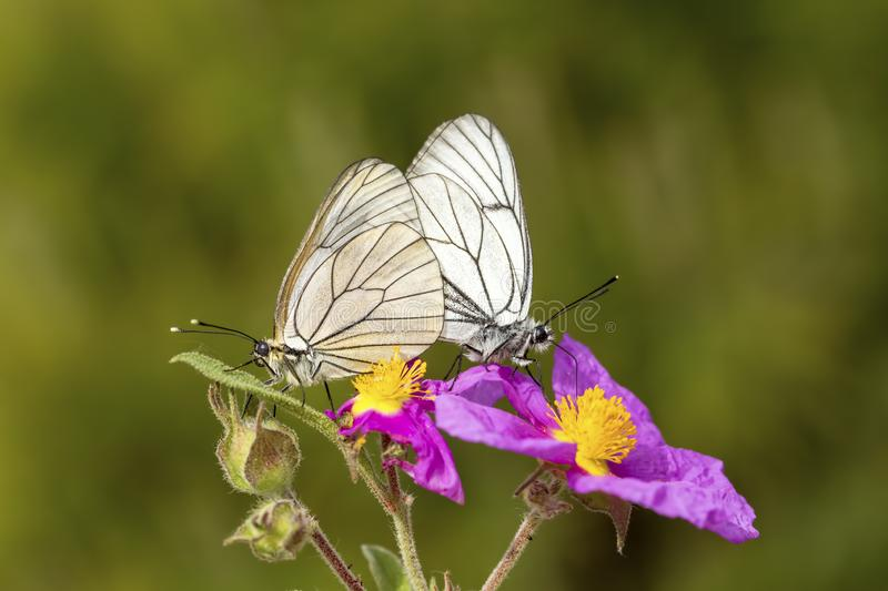 Butterfly in nature royalty free stock photo