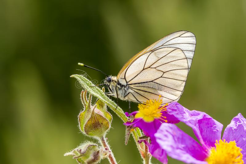 Butterfly in nature royalty free stock photography
