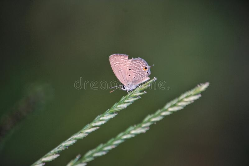 the butterfly in the nature. royalty free stock image