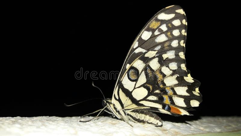 Butterfly. Nightshot, landscape, birds, insects, nature, beautiful, awesome stock photography