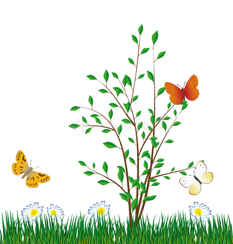 Free Butterfly On A Green Bush Royalty Free Stock Photos - 13698718