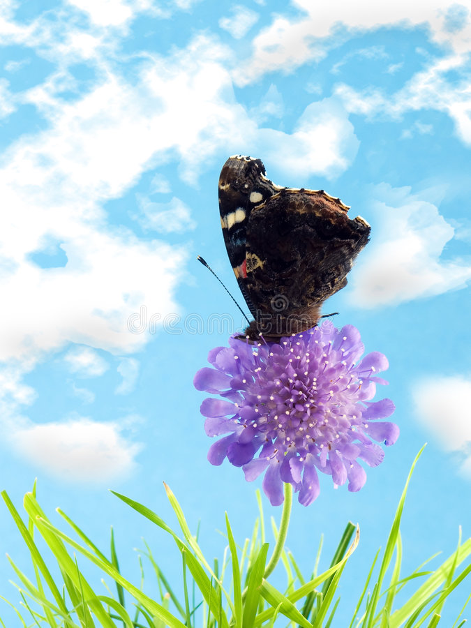Free Butterfly On Flower Royalty Free Stock Images - 2659219