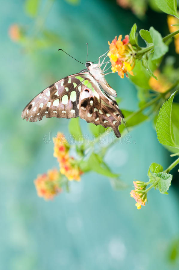 Free Butterfly On Leaf Royalty Free Stock Images - 11192429