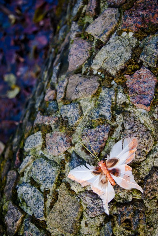 Free Butterfly On Stones Stock Photos - 104792243