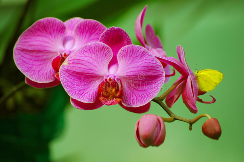 Download Butterfly on Orchid stock image. Image of beauty, insect - 6904777