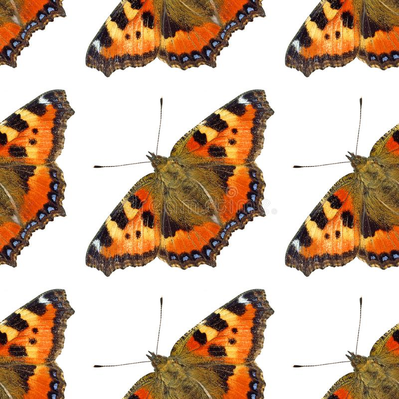 Butterfly pattern royalty free stock image