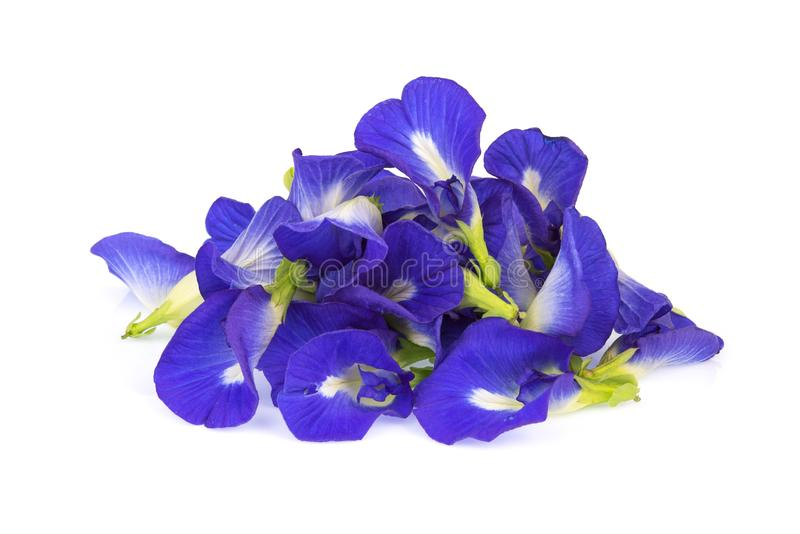 Butterfly pea, blue pea, or asian pigeonwings flower isolated on white background royalty free stock images