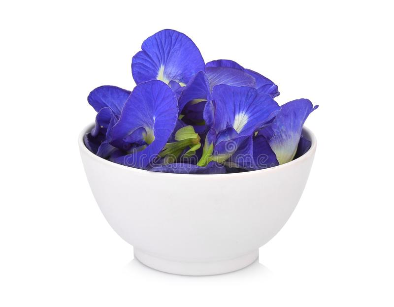 butterfly pea, blue pea, or asian pigeonwings flower in the white bowl isolated on white background stock photography