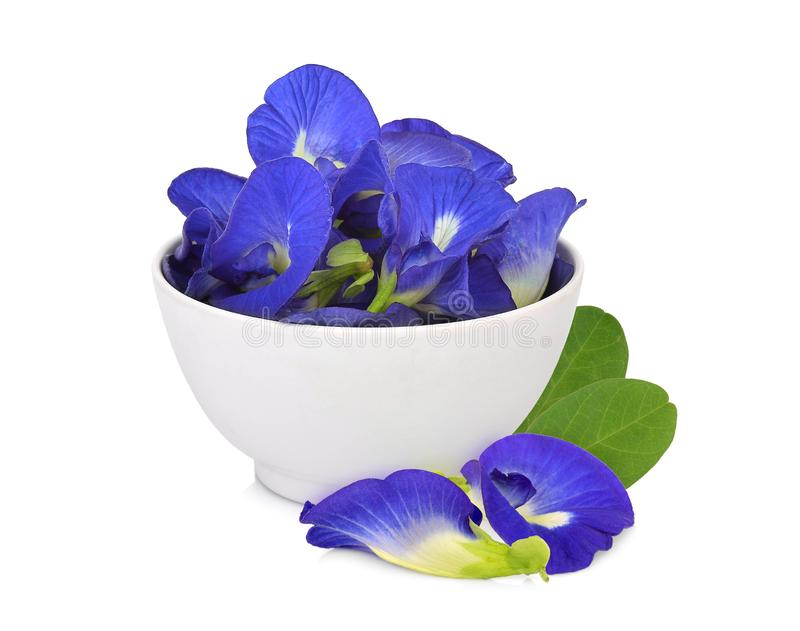 Butterfly pea, blue pea, or asian pigeonwings flower in the white bowl with leaves isolated on white background royalty free stock images
