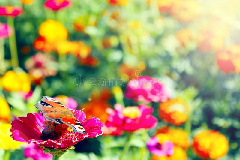 Different colors of summer. butterfly sits on the flower royalty free stock photography