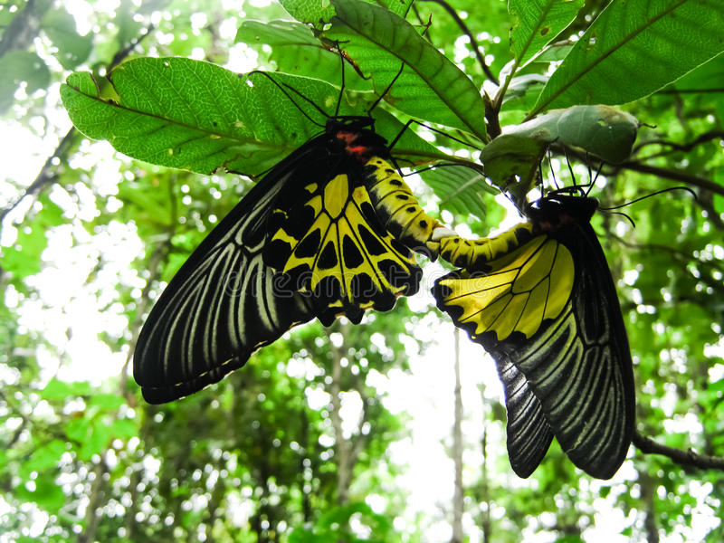 Butterfly. Perched on a green leaf royalty free stock photos