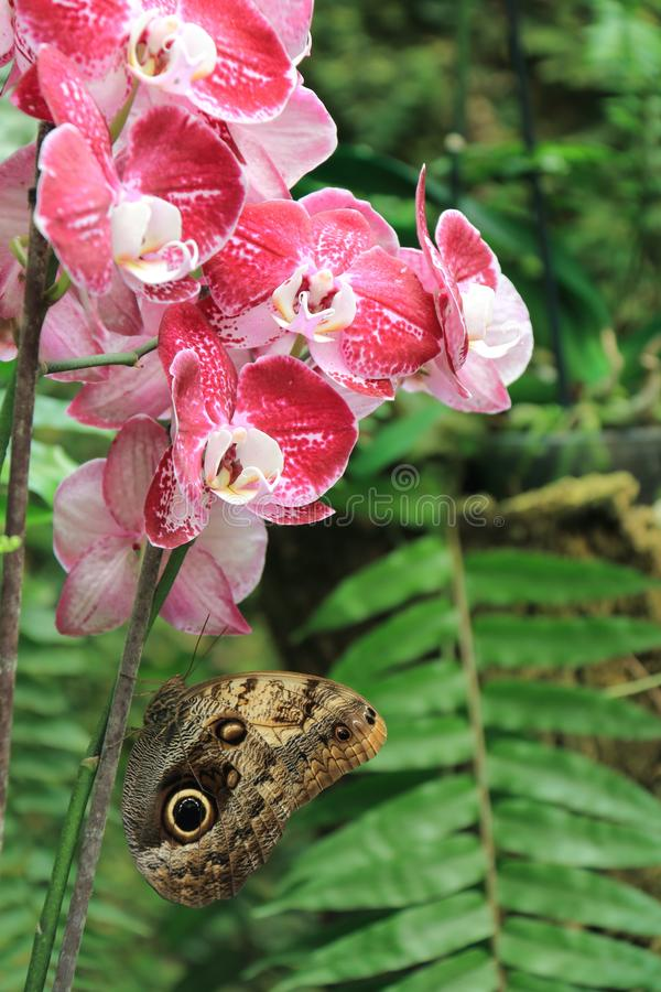 Butterfly perched on orchid royalty free stock images