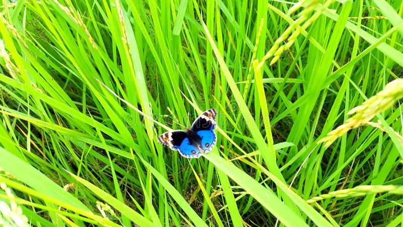 Butterfly. Photo , beautiful picture royalty free stock image