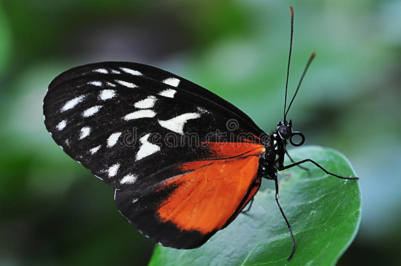 Download Butterfly stock image. Image of natural, colors, color - 44897271
