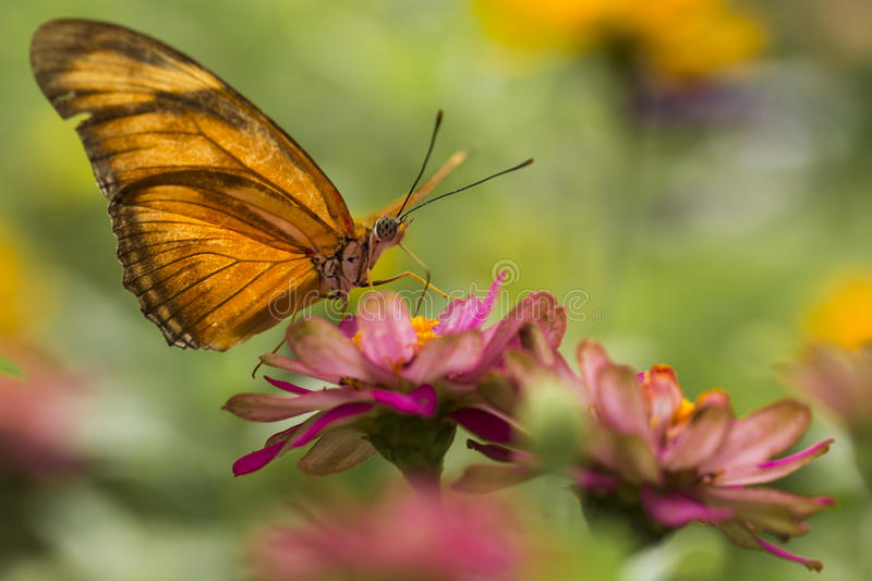 Butterfly and Pink Flower stock photos