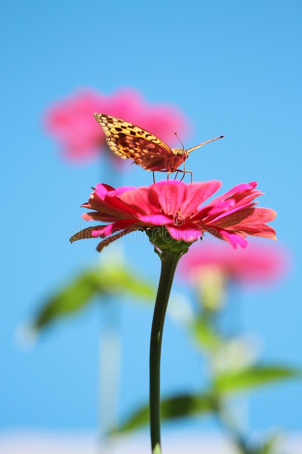 Butterfly on pink flower stock photography