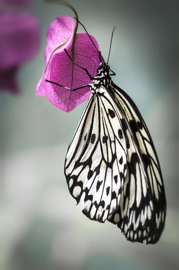 Butterfly on a pink leaves stock photos