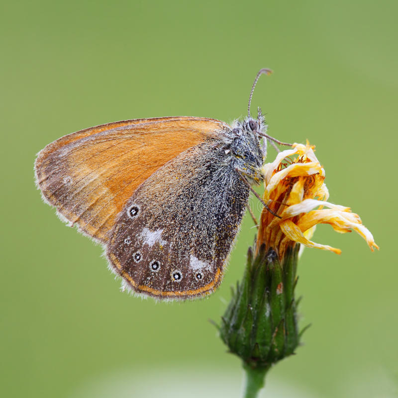 Butterfly On Planet Stock Photo