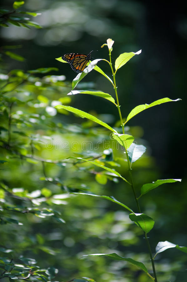 Download Butterfly On A Plant Stock Photos - Image: 18737053