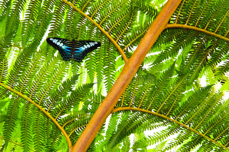 Download Butterfly On Plant Stock Photo - Image: 28803460