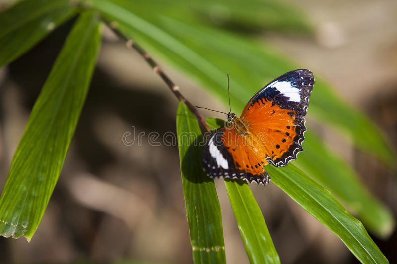 Butterfly on plant stock photography