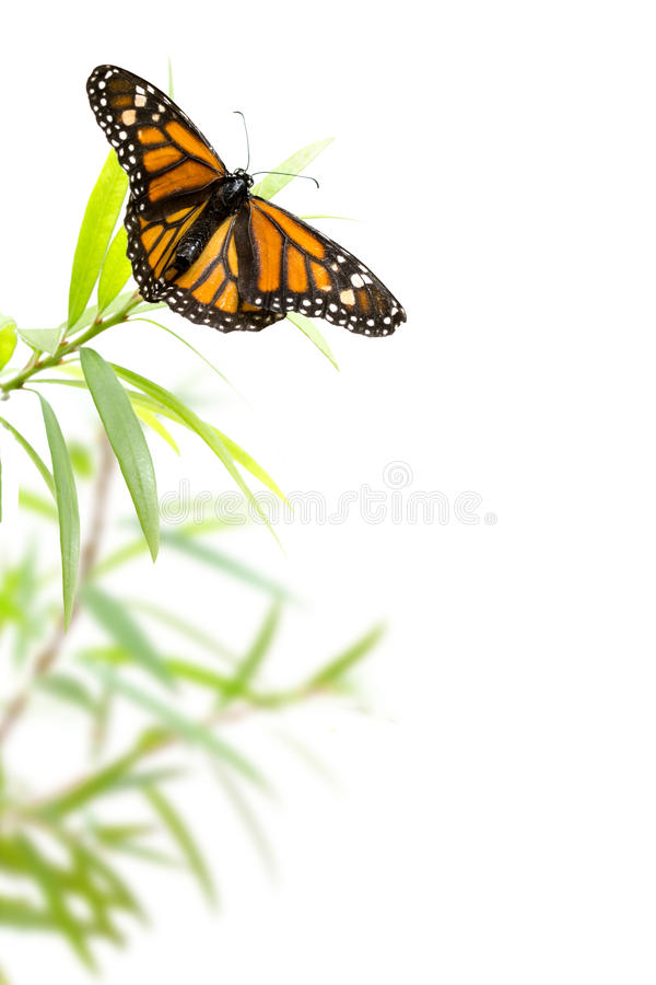 Butterfly on a plant isolated on white, border background stock photos