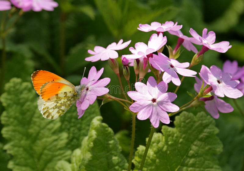 Butterfly and plant. stock photo