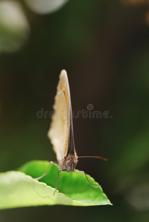 Butterfly portrait royalty free stock photography