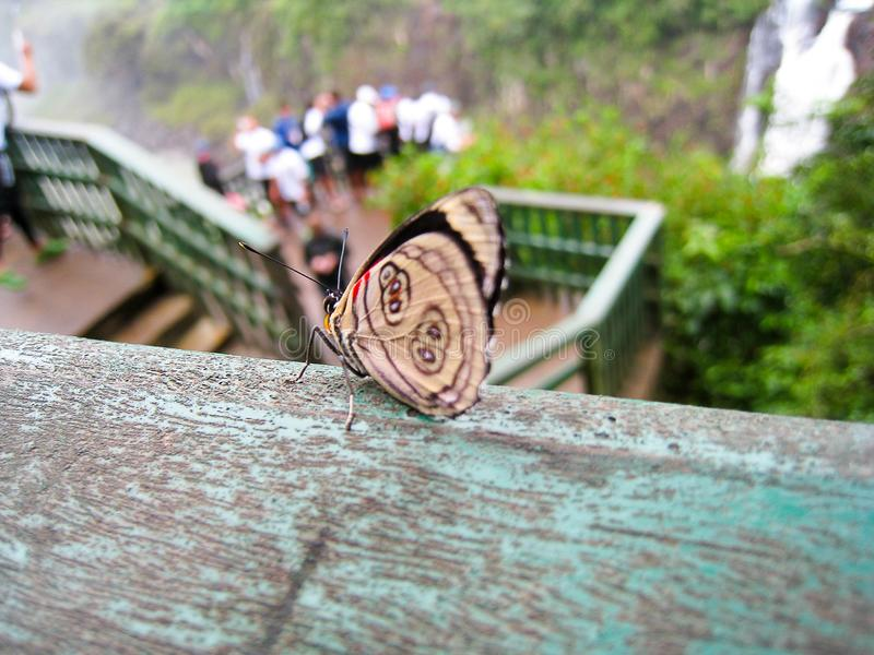 Butterfly on railing next to waterfalls royalty free stock photography