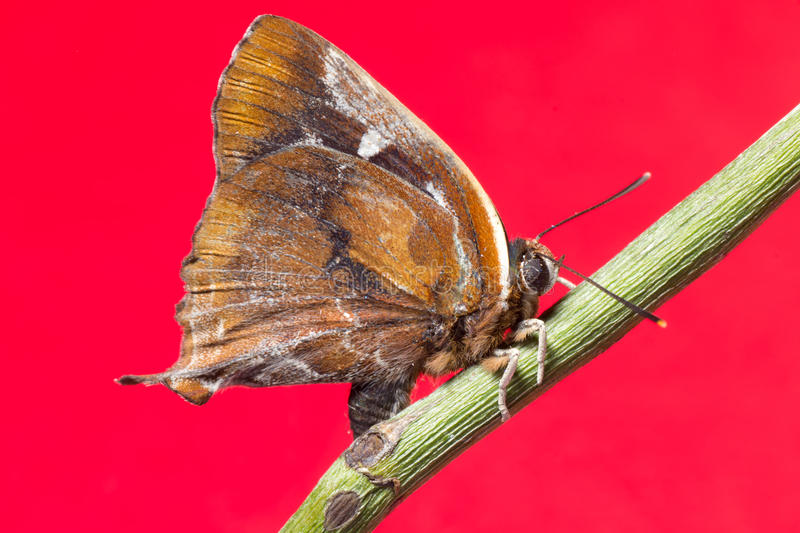 Butterfly on red background