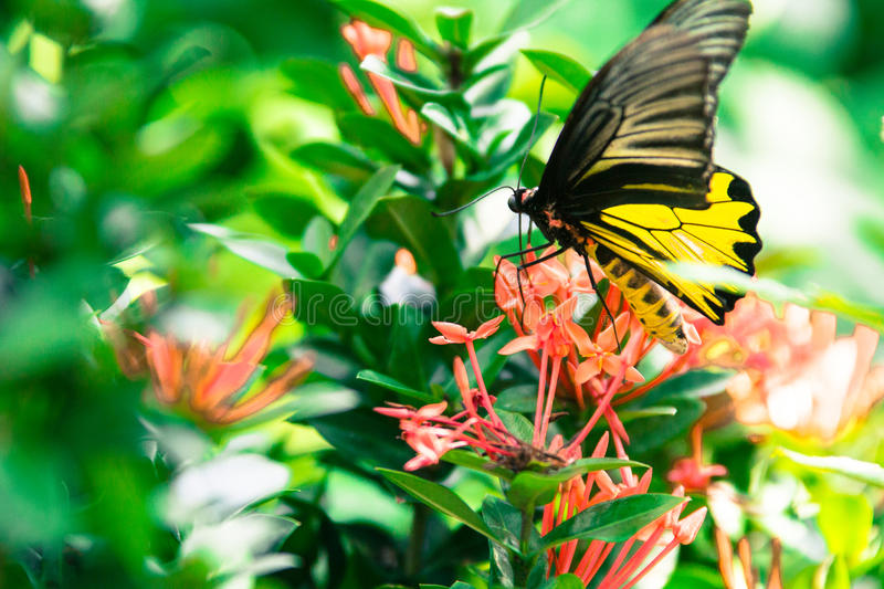 Butterfly and red flowers in park of Thailand royalty free stock photos