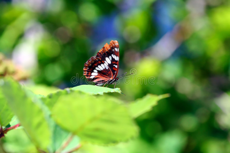 Butterfly resting royalty free stock photo