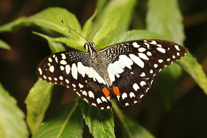 Download Butterfly 2 Stock Images - Image: 31278614