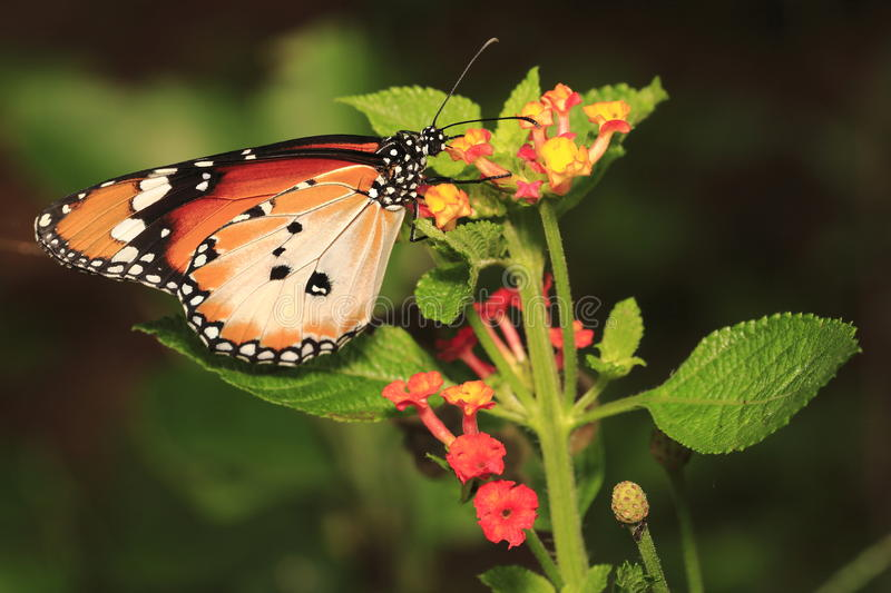 Download Butterfly 4 stock photo. Image of wildlife, prey, animal - 31278628