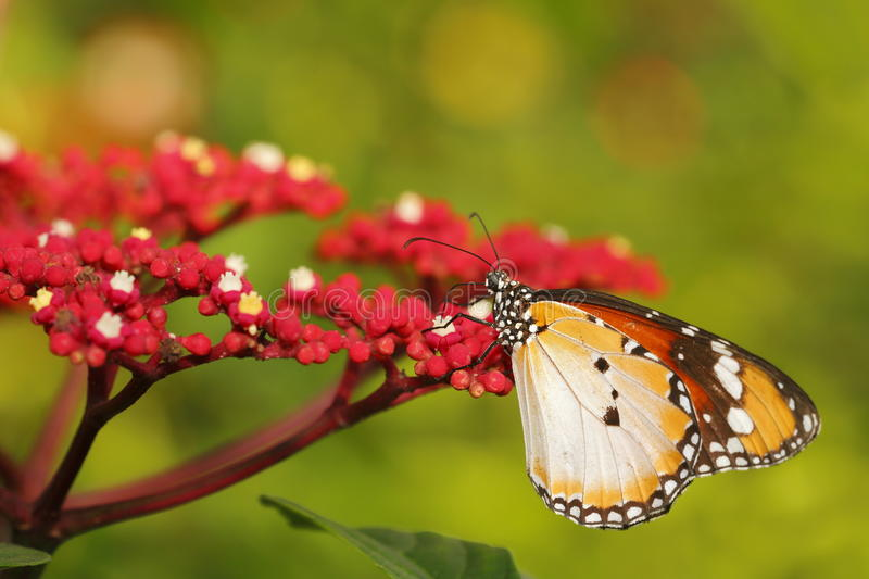 Download Butterfly 11 Stock Photography - Image: 31278662