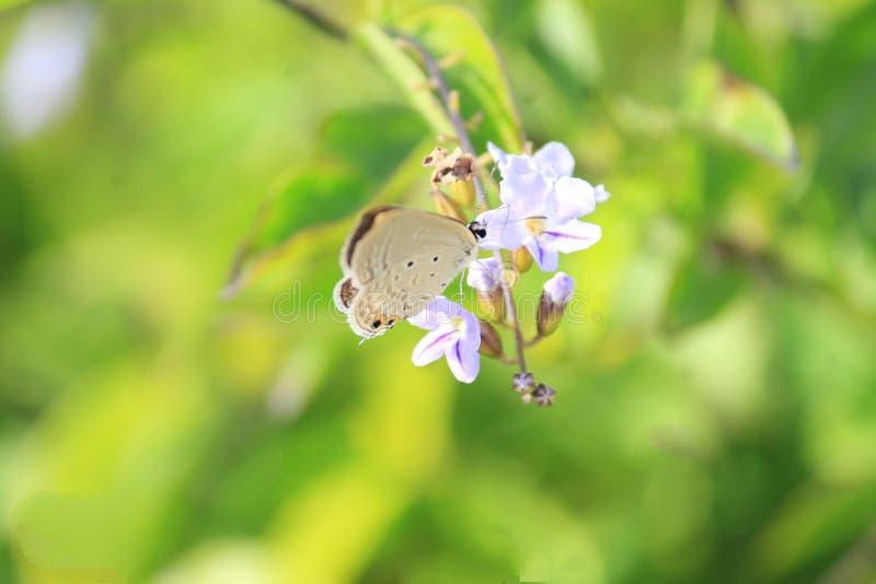 Butterfly' s-affär med en blomma Pollen suger och glad lek av krypet Naturen som är, verkar majestätiskt med allt detta royaltyfria foton