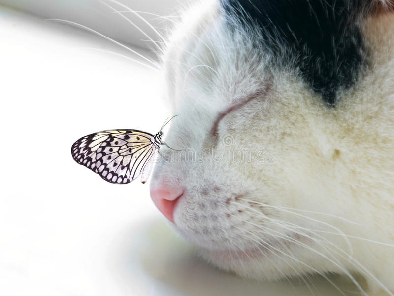 Butterfly sat on a sleeping cat nose royalty free stock photos