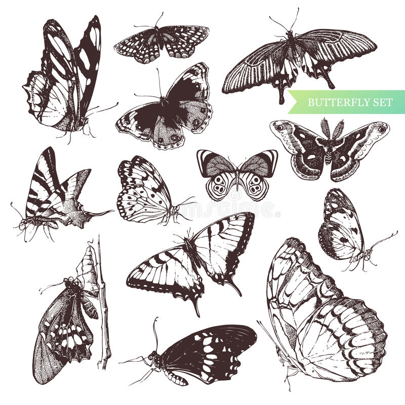 Butterfly set. Butterfly set: entomological collection of highly detailed hand drawn butterflies