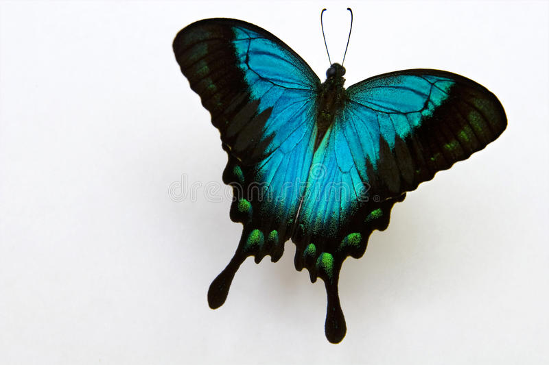 Butterfly with shadow stock photography