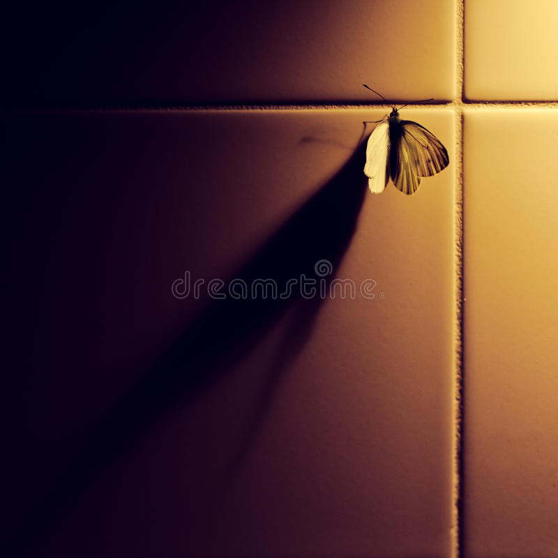 Butterfly And Shadow Stock Image