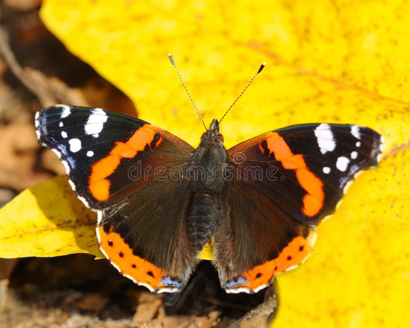 Download The butterfly on a sheet stock photo. Image of sheet, butterfly - 8115922
