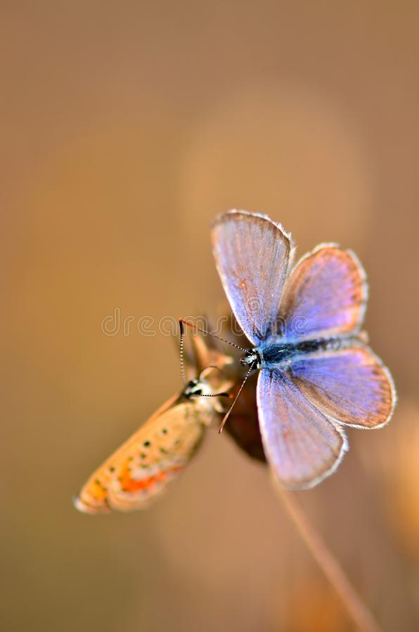 Butterfly. Shooting butterfly by making love stock photos