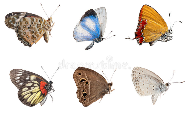 Butterfly side view collection stock photos