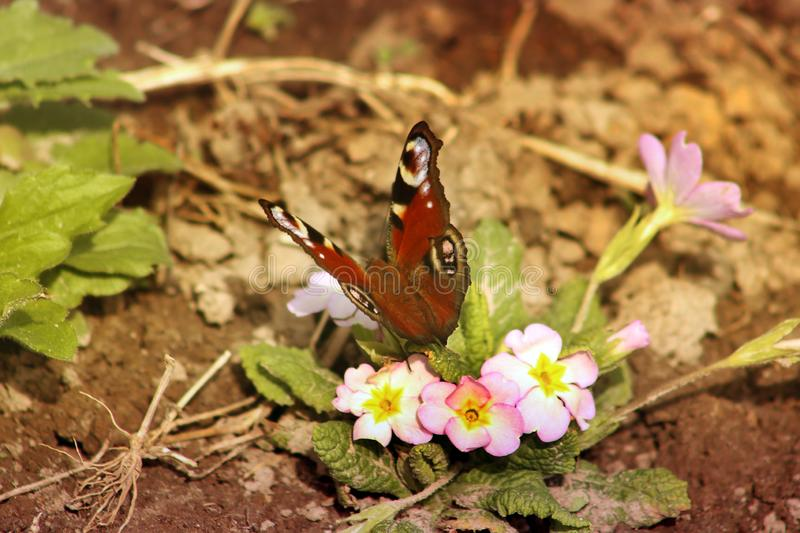 Butterfly sits on a flower stock photography